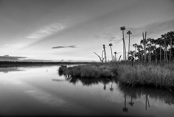 Guana lake dawn 081011 497bw black and white will dickey florida nature photography