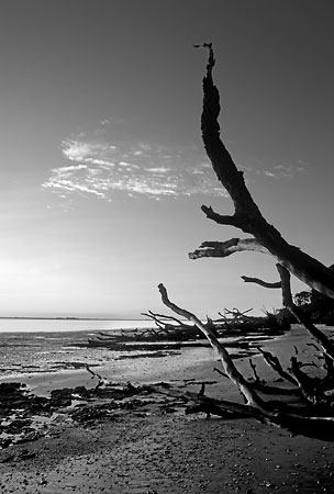 Big Talbot Island Low Tide 082204-B3-BW : Black and White : Will Dickey Florida Nature Photography - Images of Florida's First Coast - Nature and Landscape Photographs of Jacksonville, St. Augustine, Florida nature preserves