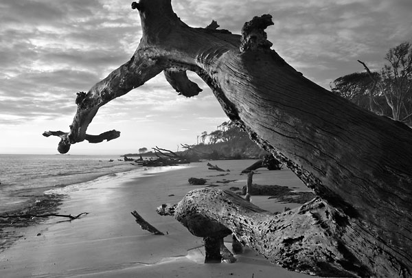 Big Talbot Sunrise 032504-A22-BW : Black and White : Will Dickey Florida Nature Photography - Images of Florida's First Coast - Nature and Landscape Photographs of Jacksonville, St. Augustine, Florida nature preserves