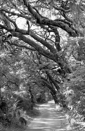 Fort George Road 052204-B6-BW : Black and White : Will Dickey Florida Nature Photography - Images of Florida's First Coast - Nature and Landscape Photographs of Jacksonville, St. Augustine, Florida nature preserves