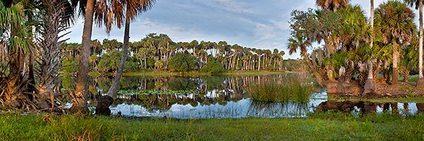 St. Johns River Palms