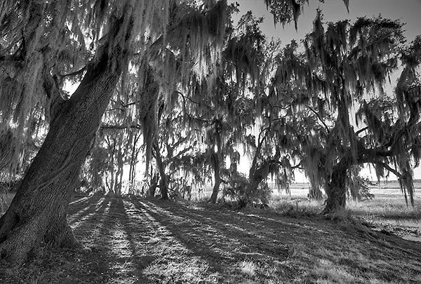 Barr Hammock Shadows