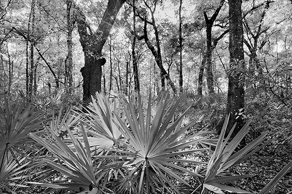 Palmetto Woods
