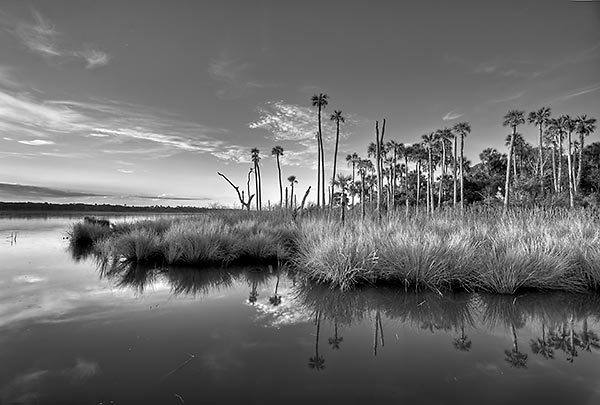 Guana Shore Dawn
