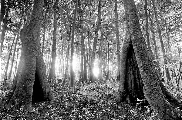 Cypress Hollows Sunrise