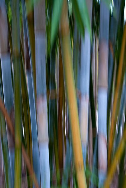 Bamboozle 5
