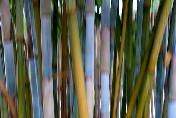 Bamboozle 4