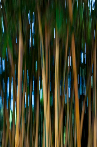 Bamboozle 3