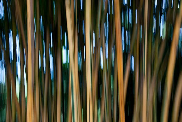 Bamboozle 2