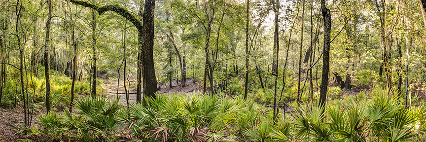Suwannee Woods