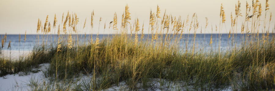 Sea Oats And Ocean 100716-116P : Panoramas and Cityscapes : Will Dickey Florida Nature Photography - Images of Florida's First Coast - Nature and Landscape Photographs of Jacksonville, St. Augustine, Florida nature preserves