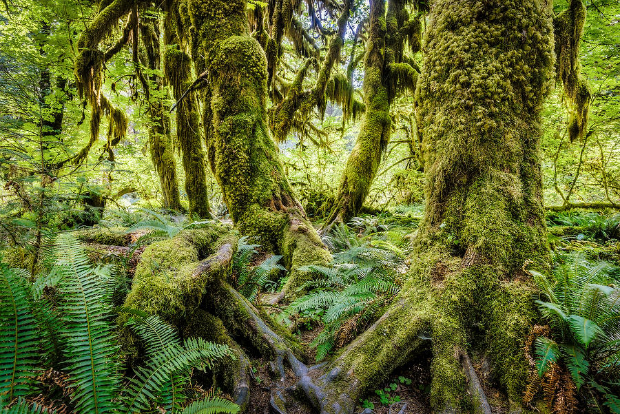 Hoh Rain Forest 