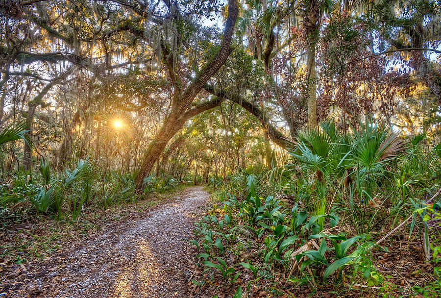 Willie Browne Trail 012710-63 : Timucuan Preserve  : Will Dickey Florida Fine Art Nature and Wildlife Photography - Images of Florida's First Coast - Nature and Landscape Photographs of Jacksonville, St. Augustine, Florida nature preserves