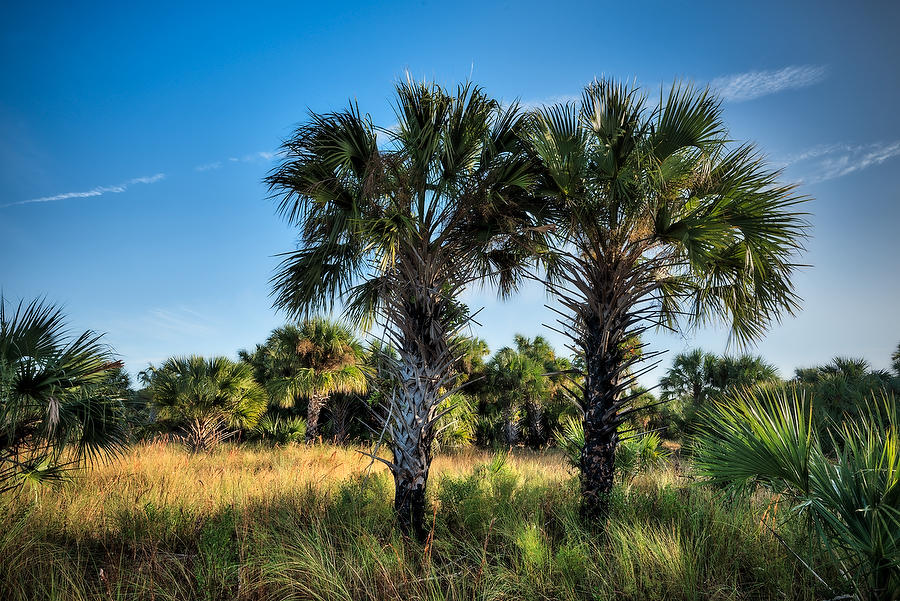 Econlockhatchee Twin Palms 