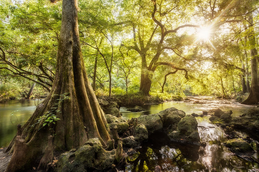 Hillsborough River 042616-182  : Waterways and Woods  : Will Dickey Florida Nature Photography - Images of Florida's First Coast - Nature and Landscape Photographs of Jacksonville, St. Augustine, Florida nature preserves
