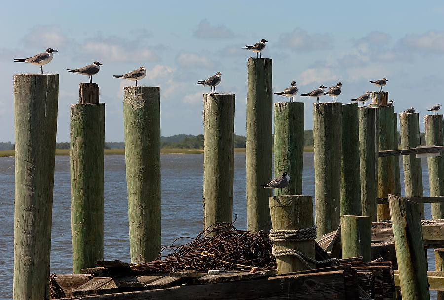 Fernandina Pier    062506-A36  : Critters : Will Dickey Florida Fine Art Nature and Wildlife Photography - Images of Florida's First Coast - Nature and Landscape Photographs of Jacksonville, St. Augustine, Florida nature preserves