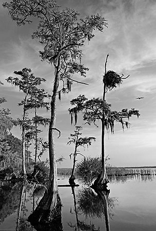 Osprey Nest, St. Johns River