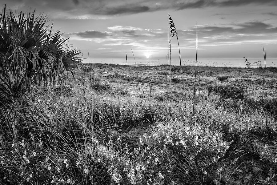 Hanna Park Sunrise 071217-148BW : Black and White : Will Dickey Florida Nature Photography - Images of Florida's First Coast - Nature and Landscape Photographs of Jacksonville, St. Augustine, Florida nature preserves