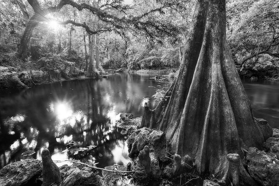 Hillsborough River 042616-79BW : Black and White : Will Dickey Florida Nature Photography - Images of Florida's First Coast - Nature and Landscape Photographs of Jacksonville, St. Augustine, Florida nature preserves